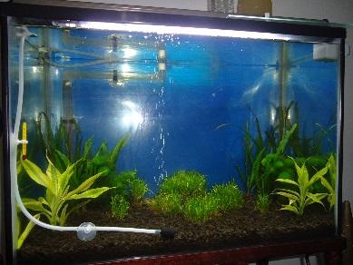 Aquascape Sederhana Murah dan Ecek-ecek
