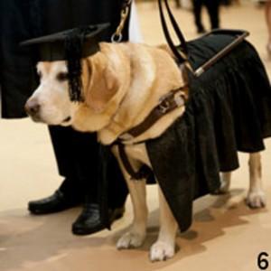 anjing-coklat-dapat-gelar-perguruan-tinggi