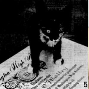 kucing-hitam-dapat-gelar-perguruan-tinggi